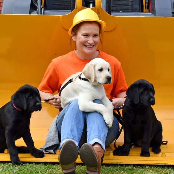 Angela wearing a hardhat sitting in a tractor bucket with three Labrador puppies